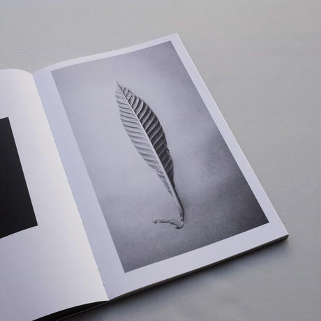 Paul Cupido / Amazonia