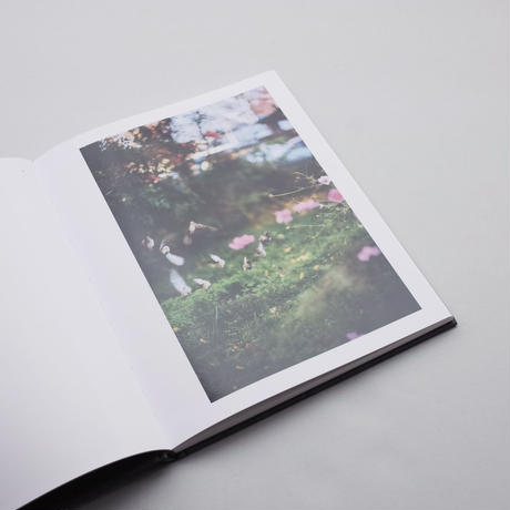 Terri Weifenbach / Des Oiseaux