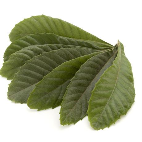 ビワの葉 30日用