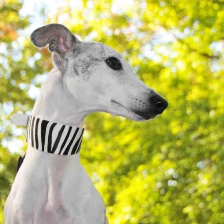 [Collar of Sweden] Zebra ワイド/ハーフチョーク
