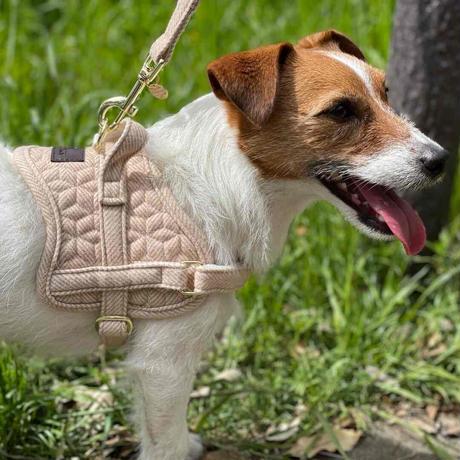 [Kentucky Dogwear]ソフトボディーハーネス Beige/Blue/Charcoal/Pink