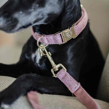 [Kentucky Dogwear]ソフトカラー Beige/Blue/Charcoal/Pink