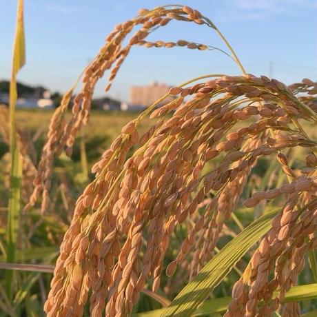 【新米】農薬不使用米 5㎏ (令和3年産)