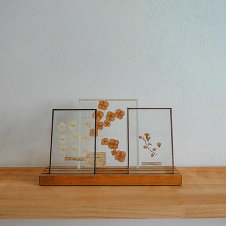 植物標本 (厚手ガラス)