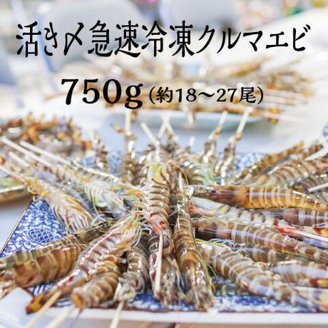 送料無料 活き〆急速冷凍クルマエビ大 鳴門産 750g(約18〜27尾)