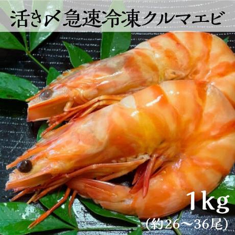 送料無料 活き〆急速冷凍クルマエビ大|鳴門産 1kg(約26〜36尾)