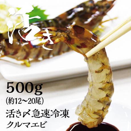 送料無料 活き〆急速冷凍クルマエビ大 鳴門産 500g (約12〜20尾)