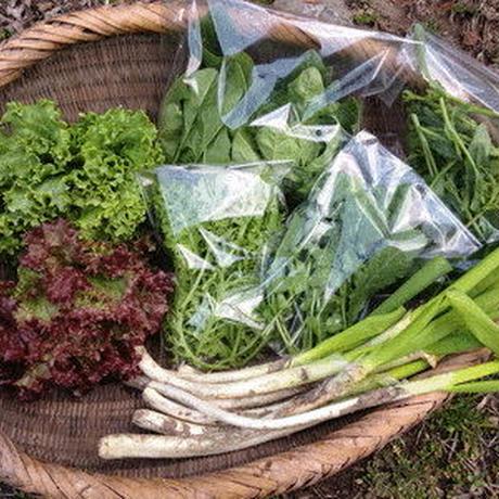 化学肥料、農薬を使わずに育てた旬の野菜セット S