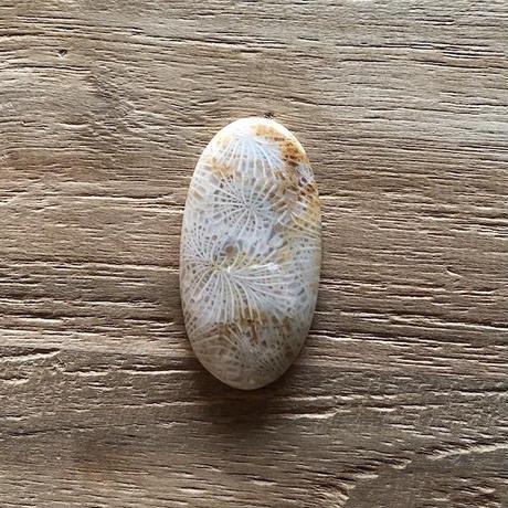 フォッシルコーラル(No.11)/天然石ルース