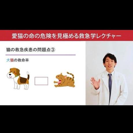 愛猫ちゃんの命の危険を見極めるための「救急学」講座