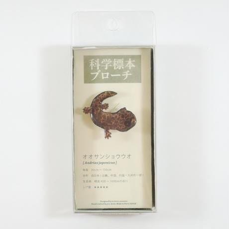 ぷろぼの 科学標本ブローチ(オオサンショウオ)