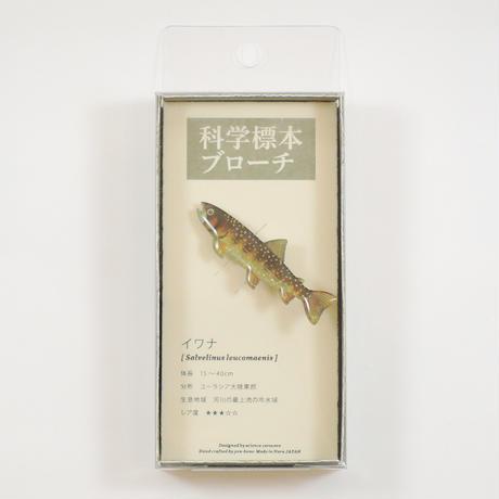 ぷろぼの 科学標本ブローチ(イワナ)