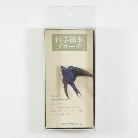 ぷろぼの 科学標本ブローチ(ツバメ)