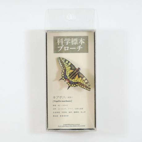 ぷろぼの 科学標本ブローチ(キアゲハ)