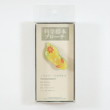 ぷろぼの 科学標本ブローチ(ノウメア・ラボウトイ)