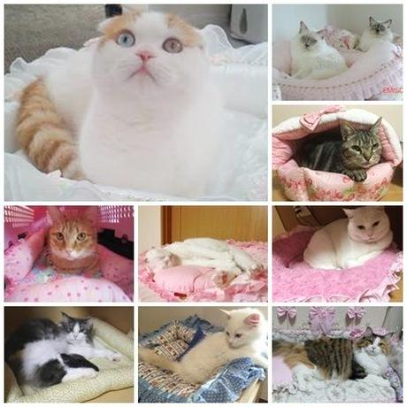ねこ館の TOP MODELS達 Part5