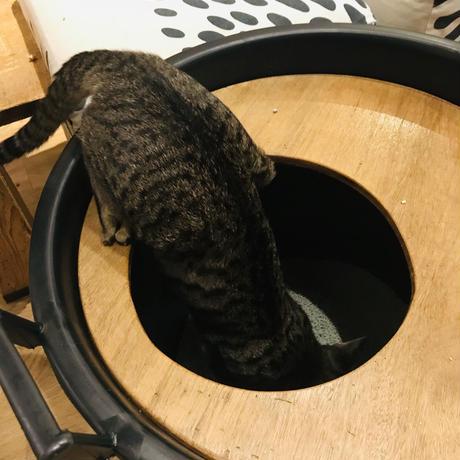 上から入る猫トイレ【イタリアンブラック】バケツと天板