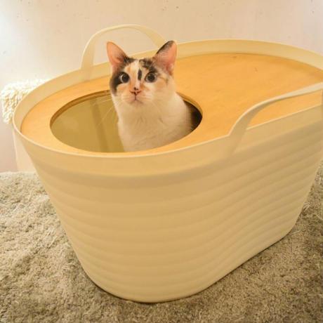 猫トイレバケツ【天板無し】  上から入る猫トイレUppifrån 【わた菓子ホワイト】