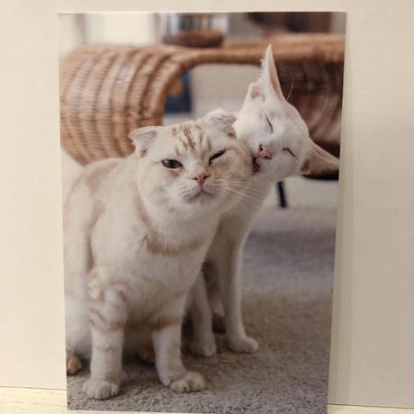 【チャリティ販売】猫の屋おでん ポストカード