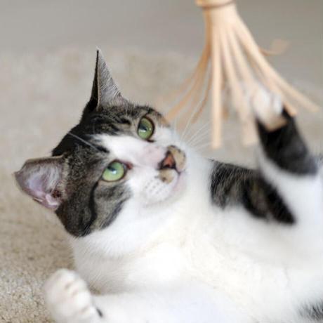 山猫本舗 │ 牛革猫じゃらしレギュラー(替え麻紐付き)