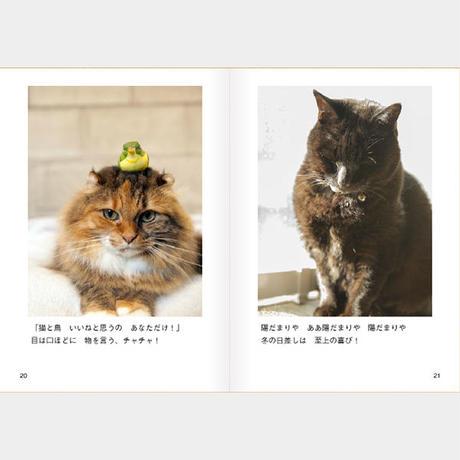 #日々猫 2016