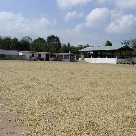グァテマラ SHB / 200g(カフェインレス・デカフェ)