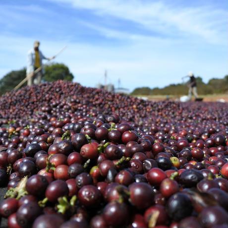 カフェインレスコーヒー定期便 200g x 2種類(約33杯)