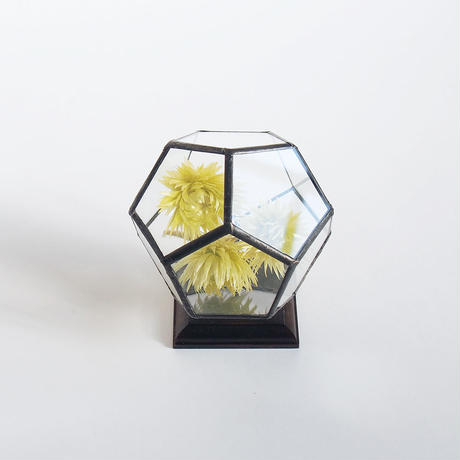 mini terrarium/regular dodecahedron/black