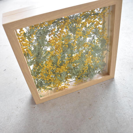 mimosa frame square 店頭受取