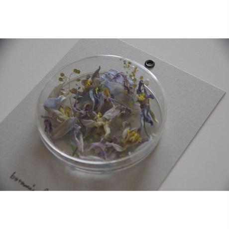 message flower /delphinium ×carnation  B