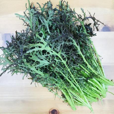 【無料サンプル】地元の畑で採れたての野菜