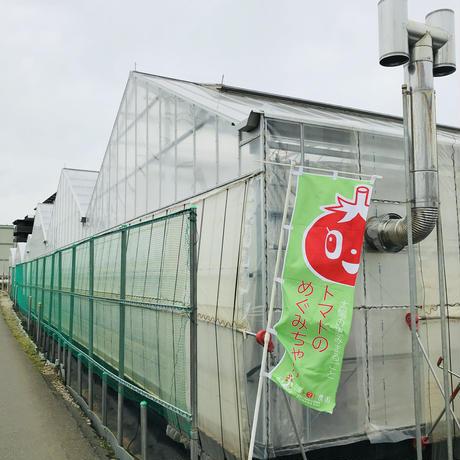 いんげん1袋(三須トマト農園:船橋市印内)