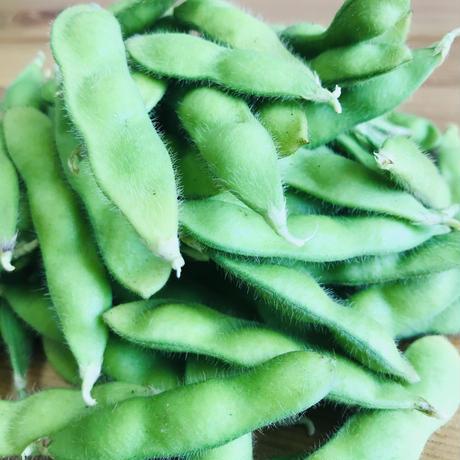枝豆1袋・250g(田中農園:印内)