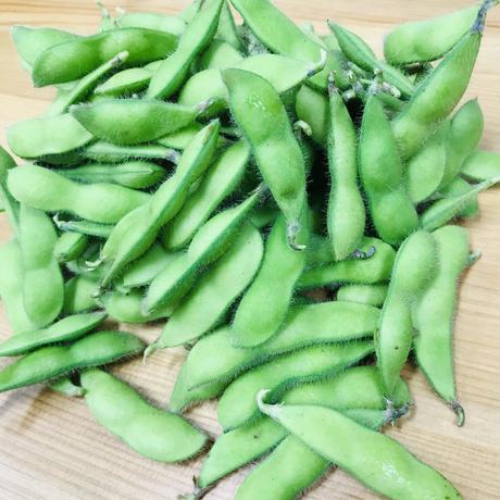 茶豆風味の枝豆1袋・250g(田中農園:印内)