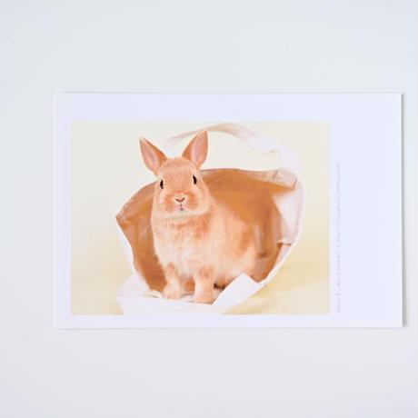 子うさぎのポストカード(同柄3枚セット)