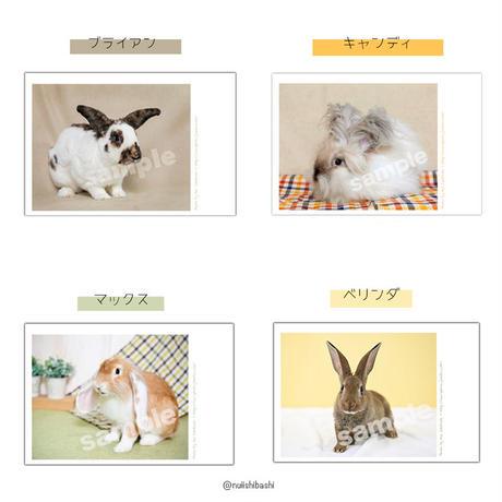フォトカード_うさぎ 4種