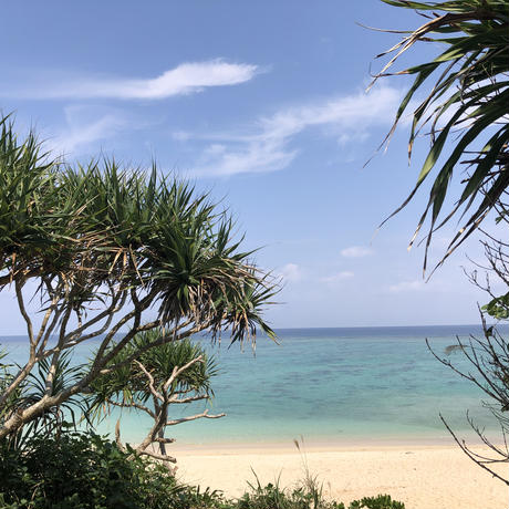 Okinawa sea shell Ocean blue