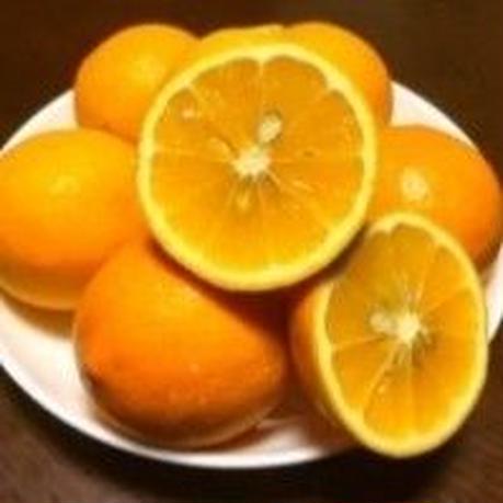 レモン【国産】3K箱,送料無料,お届け先指定可能 3月初旬から随時発送中