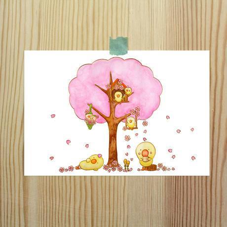 ポストカード ひよこシリーズ 「桜」