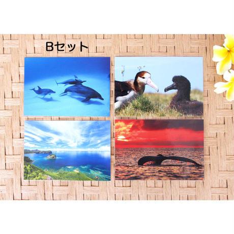 ポストカード4枚セット/アソートA・B・C・D