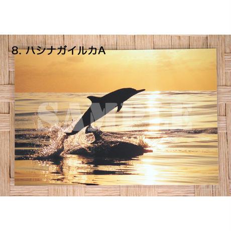 ポストカード/小笠原のいきものたち