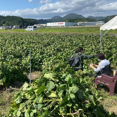 【10月限定】丹波たぶち農場黒枝豆500g(さやのみ)【丹波篠山市認定販売所】