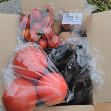 有機JAS ミニ野菜セット(900円)トマト・ナス・ミニトマト・じゃがいも 送料別