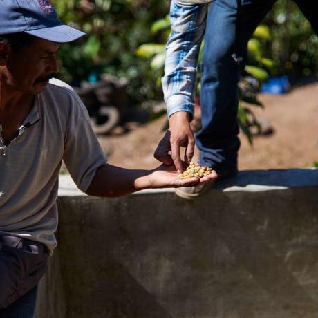 Guatemala Huehuetenango Waykan  グアテマラ ウエウエテナンゴ ワイカン 225g