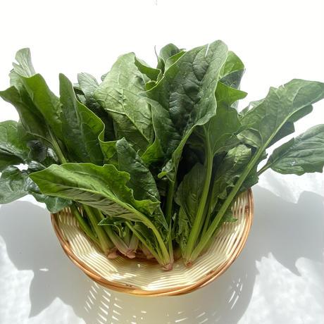旬の野菜セット(小)
