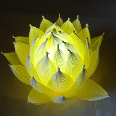 [04]したくや縁  不空の蓮  黄色黄光(おうしきおうこう)淡色 ギフトパッケージ