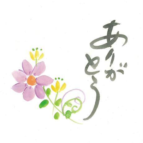 [04]したくや縁  不空の蓮  白蓮(びゃくれん) ギフトパッケージ