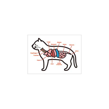 猫 ポストカードセット