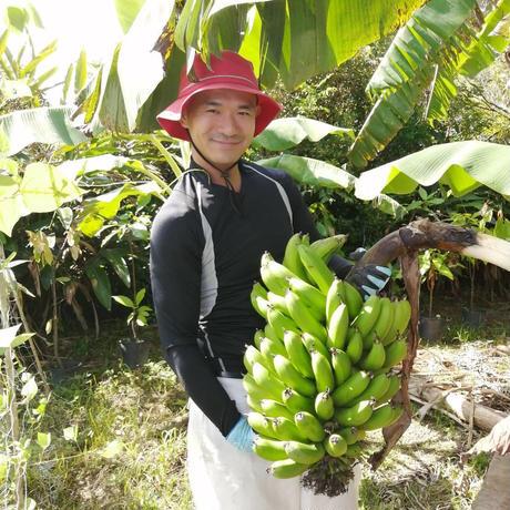 やんばるあい 島バナナのチョコレート(数量限定)