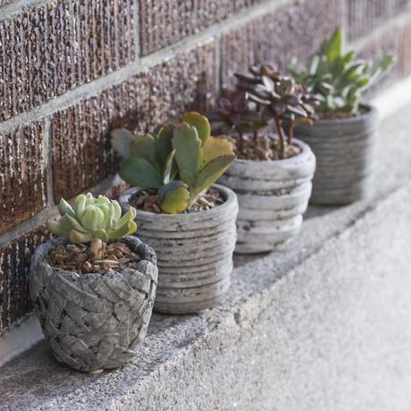 Tray 6 Cement mini orchid pots 656465